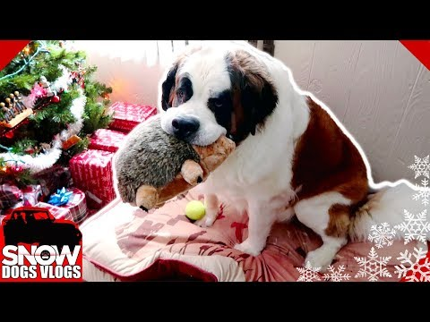 Dog Steals Presents  | Christmas 2017
