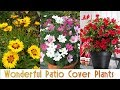 Wonderful Patio Cover Plants You Should Look