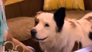 Собака точка ком   1 сезон, 16  3серия