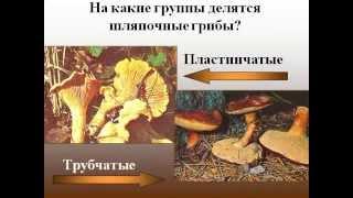 Шляпочные грибы (лаб.раб.).AVI