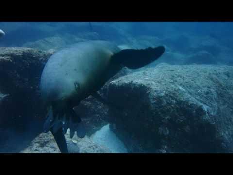 P4300034 Buceo con lobos marinos en Los Islotes Isla Partida Espiritu Santo Baja California sur