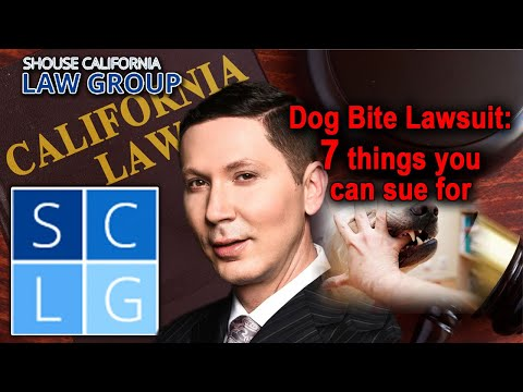 Dog bite victim? 7 things you can sue for