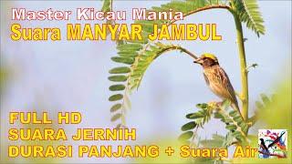 Download Masteran Murai, Suara Burung MANYAR JAMBUL Durasi Panjang + Terapi Suara Air Mengalir...FULL HD..!!!