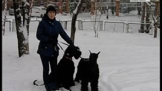 Вести-Хабаровск. Собак травят