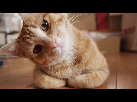 Confused cats – Funny cats compilation