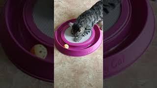 Подарил коту игрушку и выкрошил таблетку валерьянки в центр когтеточки