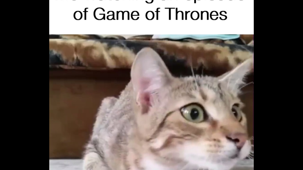 Me watching an episode of Game of Thrones!