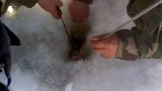 Зимняя ловля леща на р.Десна в с.Вишенки (Черниговская)(, 2011-03-09T06:26:31.000Z)