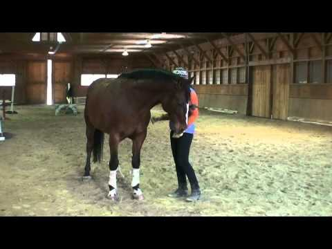 Liberty-Line-Mounted: Lateral work and Leg Yield: Liberty Phase continued