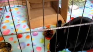 Adoptez la lapine Luna! - Adopt Luna the rabbit! Video 5