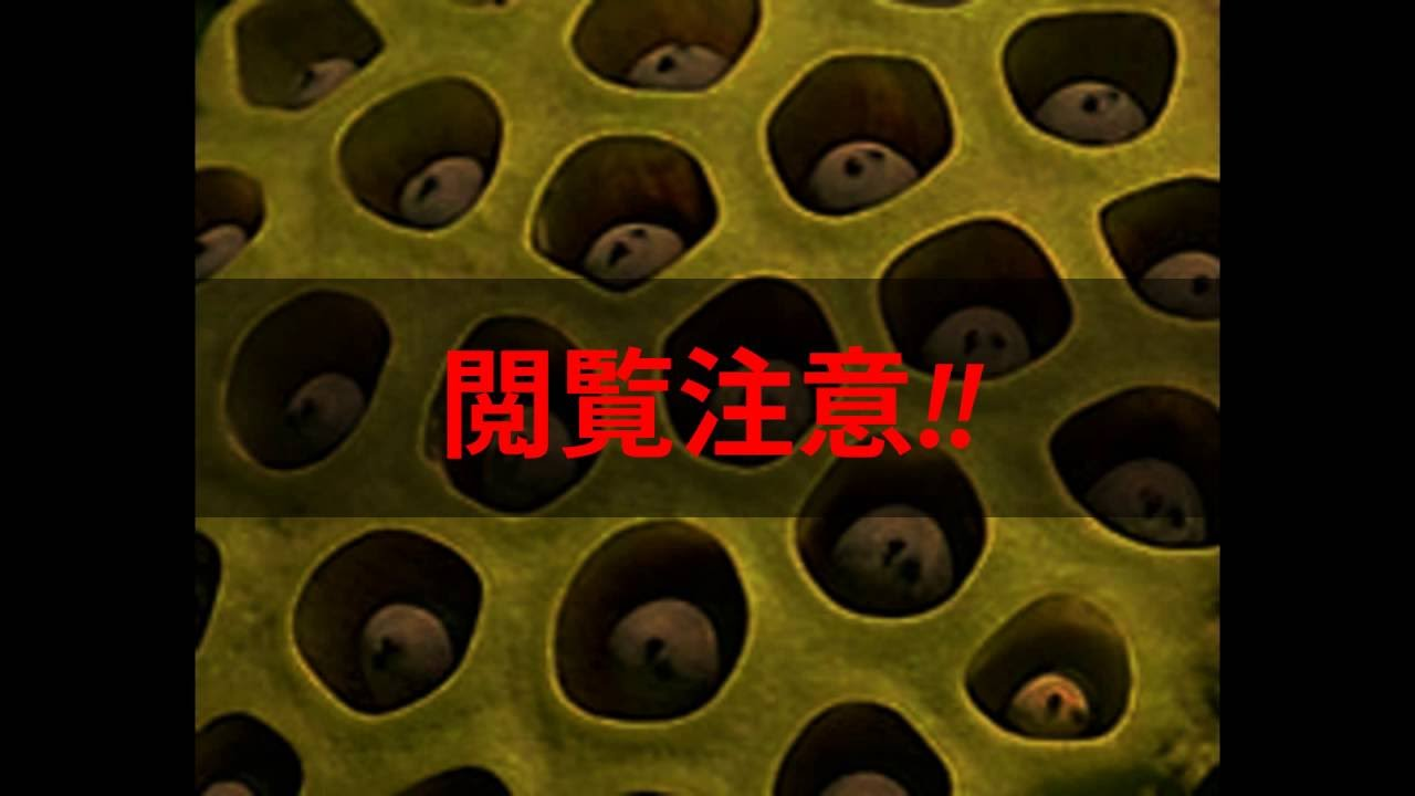 恐怖!ハスコラ!repetitive pattern phobia - YouTube