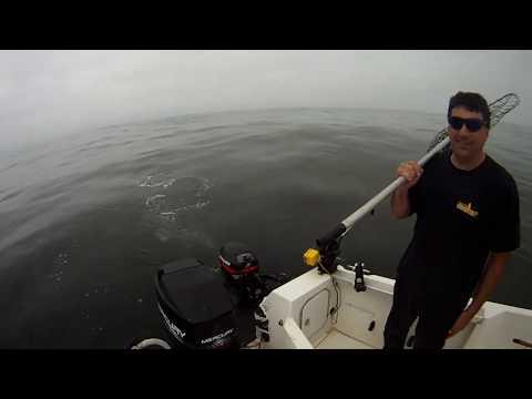 Westport King Salmon Fishing