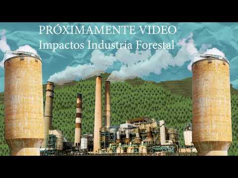 Como parte de campaña contra el modelo forestal se realiza taller de comunicación comunitaria
