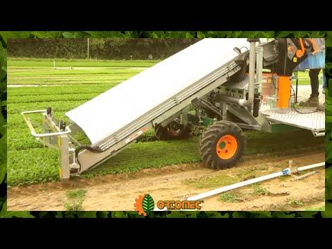 Leafy greens harvester - ORTOMEC 8300 - raccoglitrice per ortaggi a foglia