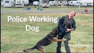 Police Working Dog, Heels and Attacks!