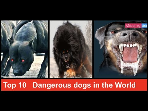 top-10-dangerous-dogs-in-the-world-|-dangerous-dogs-|-missing-link