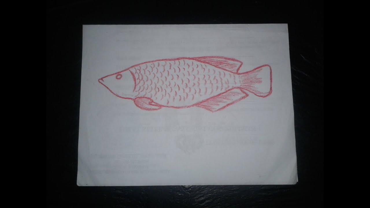 104 Gambar Sketsa Ikan Akuarium Gudangsket