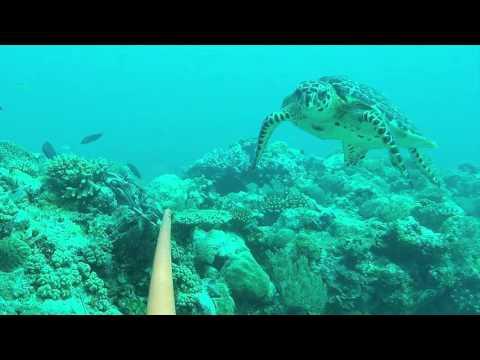Ashmore Reef, North West Australia