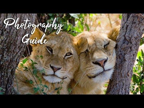Safari Photography Tips for Beginners