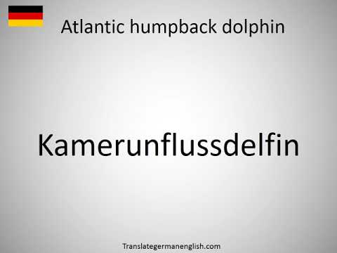 How to say Atlantic humpback dolphin in German?