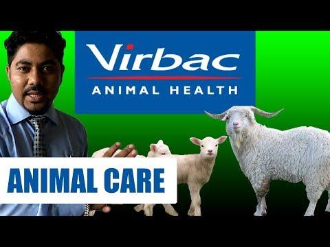 RK Goat Farm & VIRBAC Medication Animal Health INFORMATION Cattle Farming