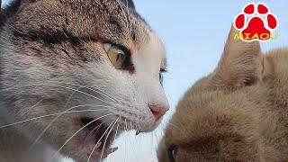 猫の縄張り争い。取っ組み合いは無く顔が極端に近い頭突き?があったの...