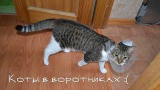 Несчастные коты в воротниках :(