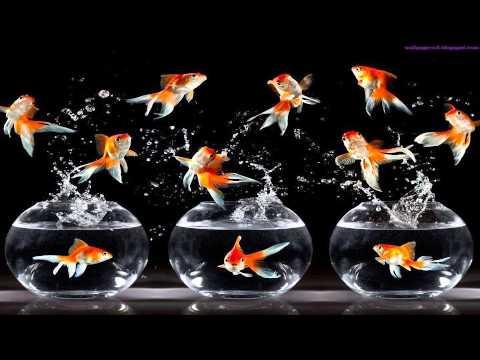 Nosaj Thing Aquarium