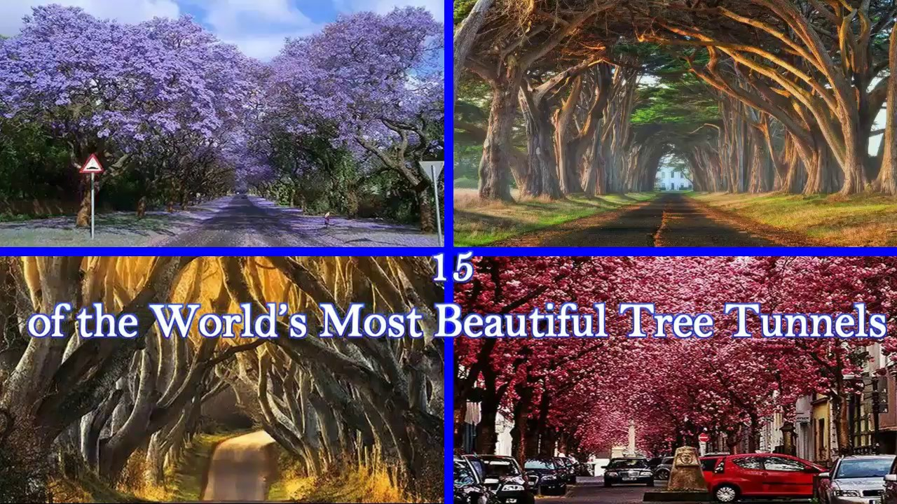 The most beautiful tunnels of trees