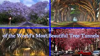 15 of the World's Most Beautiful Tree Tunnels trailer