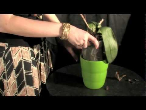 Watering Your Just Add Ice Orchids With Ice Youtube