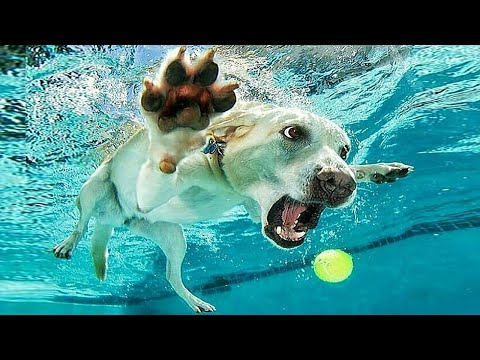 Funniest Animals 🐧 - Best Of The 2020 Funny Animal Videos 😁 - Cutest Animals Ever