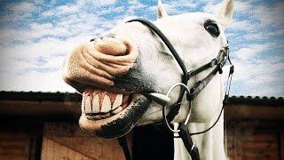 FUNNY HORSES ★ Funny Horse Videos 2016 🐴 (HD) [Funny Pets]