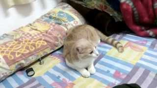 Pharrell Williams Scares CAT