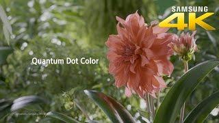 Samsung 4K HDR: Quantum Dot Display
