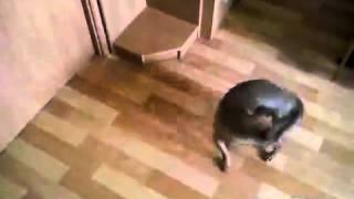Собака ( В мире животных)