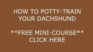 **How to POTTY-Train a Dachshund Puppy**BOW !! cLICK hERE==)