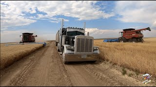 The Best Wheat Harvest Video on YouTube