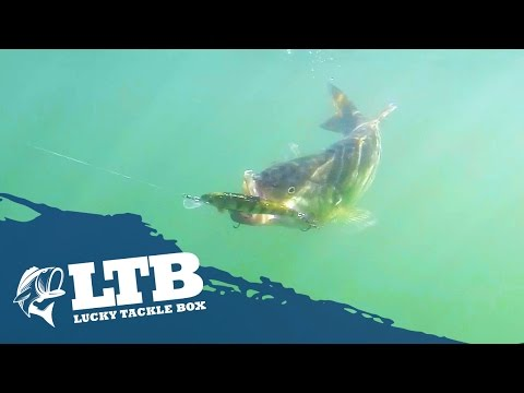Thumbnail: How to Fish a Jerkbait for Summer Bass