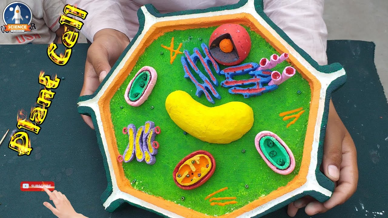 Plant Cell Model by Thermocol || Top 3d plant cell project ...