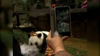 Старейшая в мире панда отпраздновала свой день рождения
