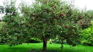 Watch Jane Siberry Jesus Christ The Apple Tree video