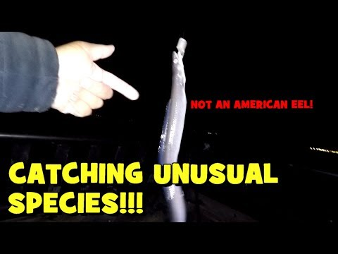Do You KNOW THESE SPECIES?! Pursuing UNUSUAL NJ Species Of Fish!
