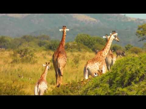 Best of African Wildlife HD   Massive animal spectacle!!!