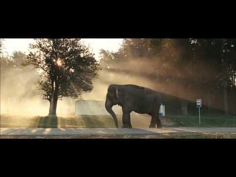 Фильм «Слон». Утро.