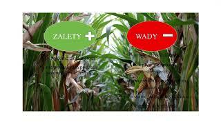 Sposoby zabezpieczania upraw polowych przed presją zwierząt – mgr inż. Magdalena Swadźba-Karbowy