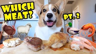 Which Meat Does My Corgi Dog Prefer? Pt. 2 Lamb, Duck, Turkey, Shrimp || Life After College: Ep. 644