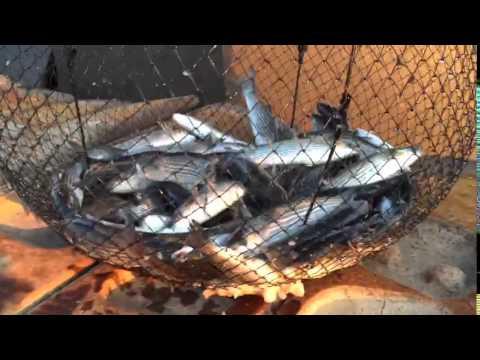 pinter ile balık avı 2015 , sepetle Balık avı ,