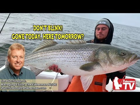 October 22, 2020 New Jersey/Delaware Bay Fishing Report With Jim Hutchinson, Jr.