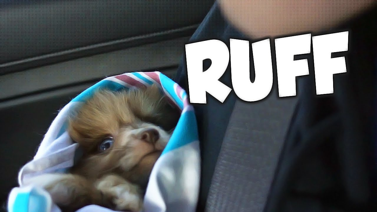 Cutest Dog Ever Joins Tk Whos Chaos Youtube